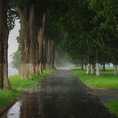 """фото """"про дождь"""""""
