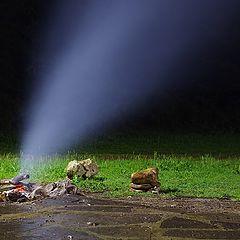 "фото ""Дим без огън няма"""