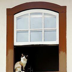 "photo ""The cat"""