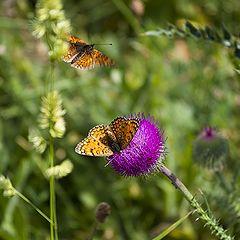 """фото """"бабочки"""""""