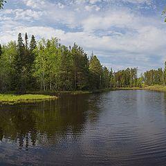 "фото ""У лесного озера"""