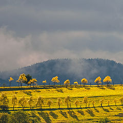 """фото """"Когда деревья светятся"""""""