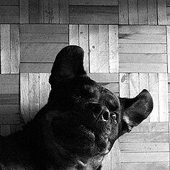 """фото """"An artist's Dog"""""""