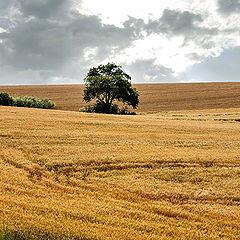 """photo """"Harvest ...."""""""