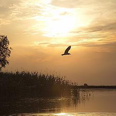 """фото """"вечерняя графика реки"""""""