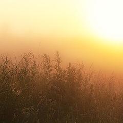 """фото """"Роса, паутина, утро.."""""""