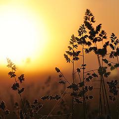 """фото """"Солнце ясное, свобода!"""""""