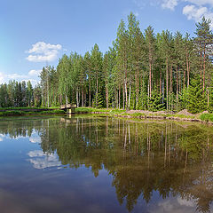 """photo """"Forest lake"""""""