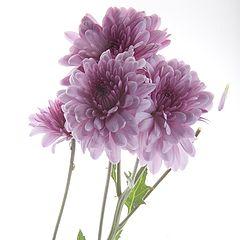 """фото """"flores"""""""