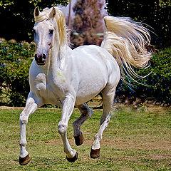 "фото ""POWER HORSE"""