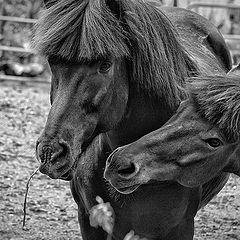 "photo ""horses"""