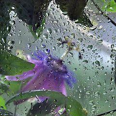 """фото """"Каждый день дожди..."""""""