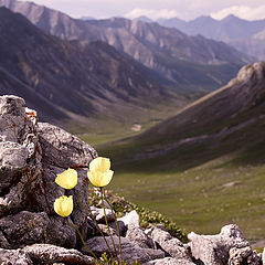 "фото ""Flowers on the pass"""