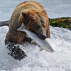 "фото ""Catch"""