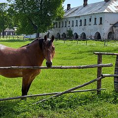 "photo ""about a horse)))"""