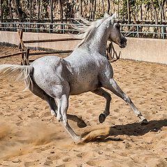 """фото """"Arabian Beauty.."""""""