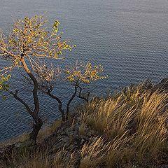 """фото """"И на камнях растут деревья ...(6)"""""""