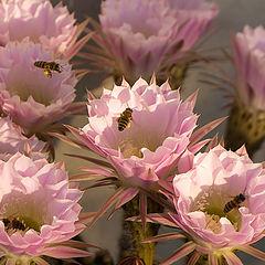 """фото """"""""...неправильные пчёлы..."""""""""""