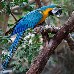 """фото """"The parrot 2"""""""