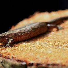"""фото """"Lizard"""""""