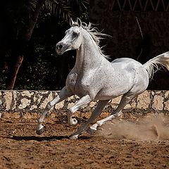 """фото """"Arabian Beauty..2"""""""