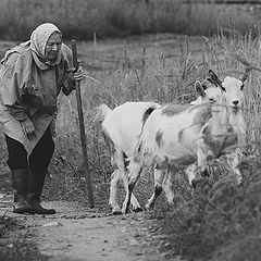 "photo ""The old woman and goats"""