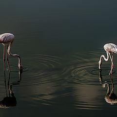 """photo """"Flamingos"""""""