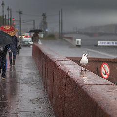 """фото """"Ошалевшая чайка от дождя и града..."""""""