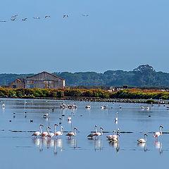 """фото """"TEJO Estuary"""""""