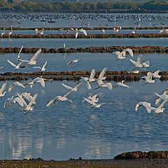 "фото ""Early Morning Estuary"""