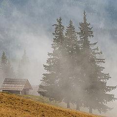 "фото ""Теряясь в тумане"""