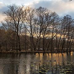 """photo """"The last ray of autumn sunset"""""""