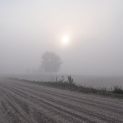 """фото """"По дороге в туман"""""""