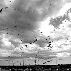 "photo ""seagulls"""