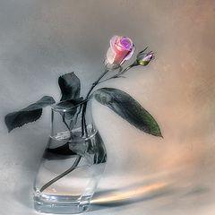 """фото """"Роза в стакане..."""""""