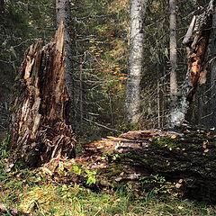 """фото """"Старый лес - 2"""""""