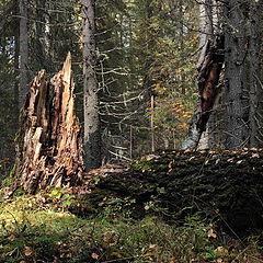 """фото """"Старый лес - 1"""""""