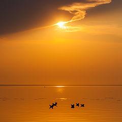 "photo ""Meditation on gulls"""