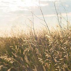 """фото """"летняя трава"""""""