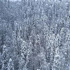 """фото """"Зима в разгаре"""""""