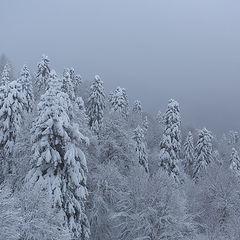 """фото """"Зимы прекрасные мгновенья"""""""