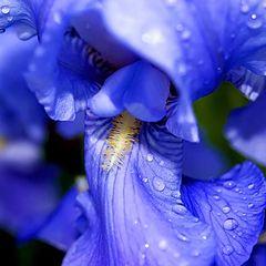 """фото """"Синий цвет..."""""""