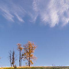 """photo """"Поздняя Осень"""""""