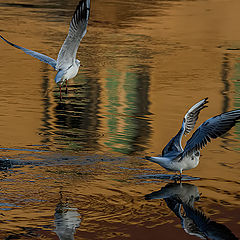 "фото ""Water ballet"""