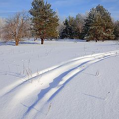 """photo """"Covered with snow"""""""