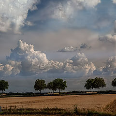 "фото ""Trees and clouds 2"""