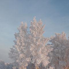 """фото """"В зимних нарядах..."""""""