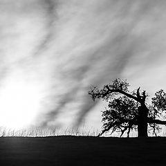 """photo """"В Свете Заходящего Солнца"""""""