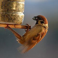 """photo """"Bird breakfast"""""""