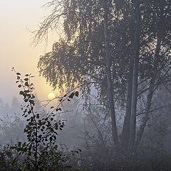 """фото """"В тёмно синем лесу..."""""""